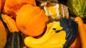 Pumpkins2.2