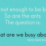 Busy_ants