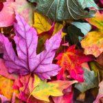 Leaves_Oct20