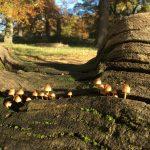 Fungi-log